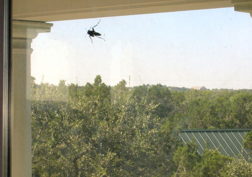 A Texas-Sized Wasp