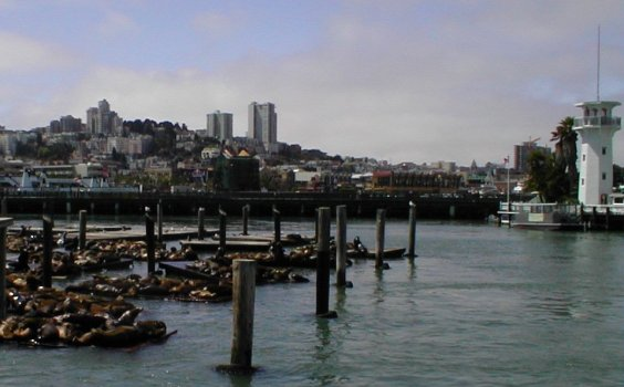Sea Lions at Fishermans' Wharf